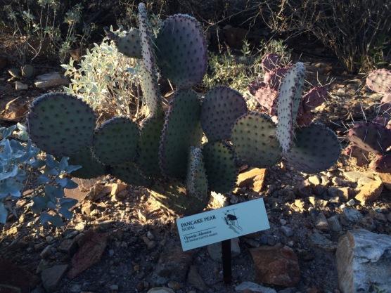 arizona-sonora-desert-museum-cactus-tucson
