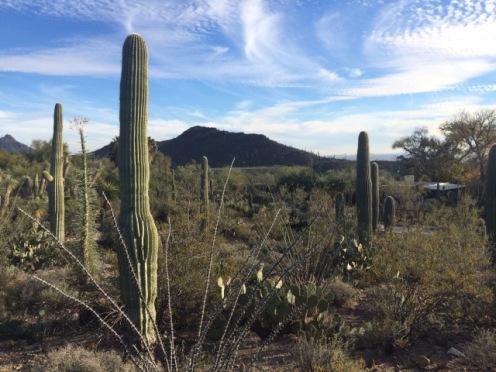 Arizona- Sonora Desert Museum