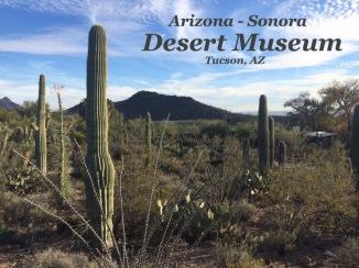 arizona-sonora-desert-museum-visit-tucson-arizona