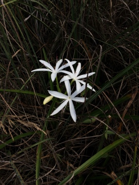 flowers-florida-everglades