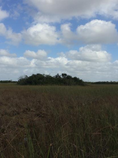tree-island-everglades-florida