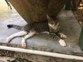 Key_West_Hemingway_Home_Cat_Grace_Kelly