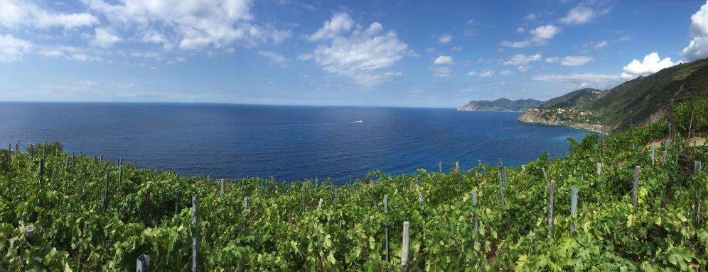 Cinque_terre_italy_manarola_vineyard_ocean_view