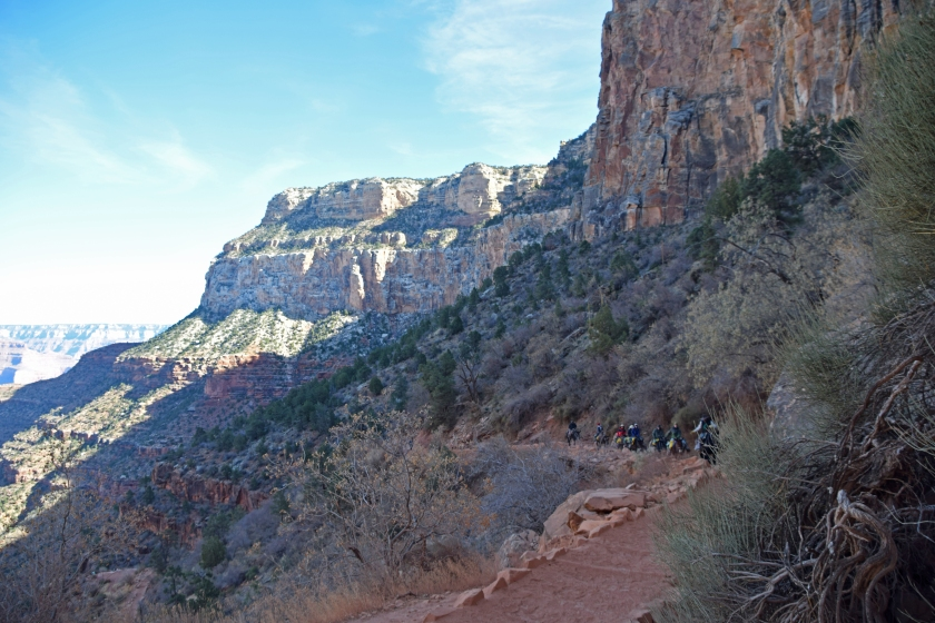 Grand_canyon_bright_angel_trail_hike_donkey